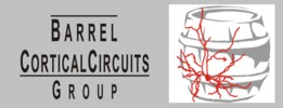 Smallest_barrel_cortical_circuits